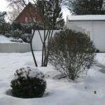 Marmstorf Privatgarten, Garten Neugestaltung, Amelanchier, Eibe, Liguster und Buxus