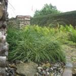 Gräser mit Steine