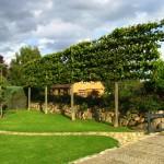 Tilia Spalier Linden, Natursteinmauer